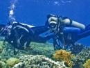 Dive-Australia.jpg