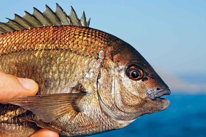 какую рыбу можно ловить с берега черного моря