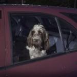 Собачий штраф в Австрии составляет целое состояние