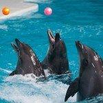 Под открытым небом откроется в Москве дельфинарий